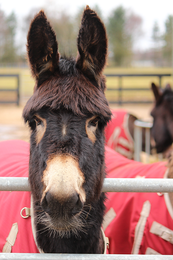 free activities for kids this Easter holiday at Redwings Mountains