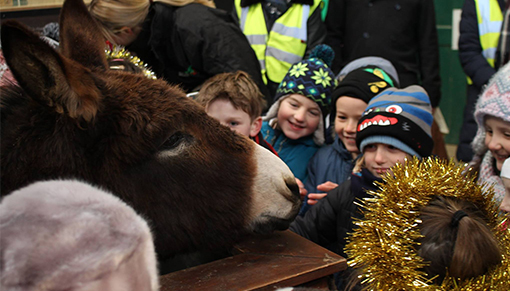 After the play the children met Redwings' donkey residents