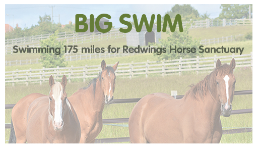 Andy Croxall's big swim for Redwings