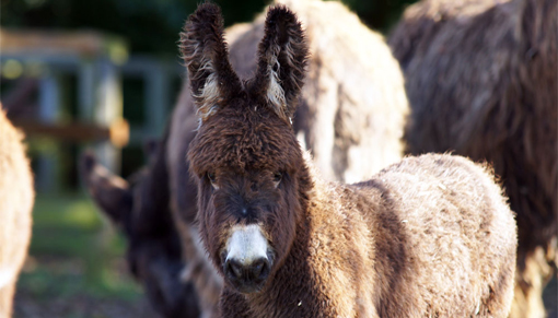 Donkey foal Arya hailed newest Redwings Adoption Star