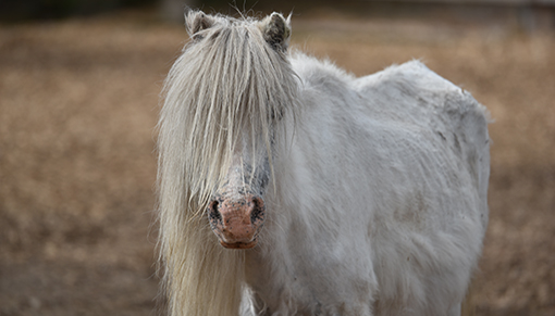 The UK is in a grip of a horse crisis