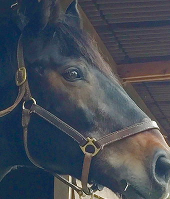 Bridget's horse Mac
