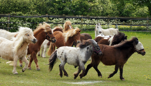 Fundraise to help rescued horses