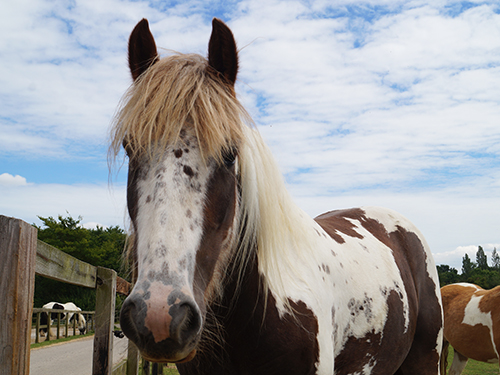 Home | Redwings Horse Sanctuary and Equine Veterinary Centre