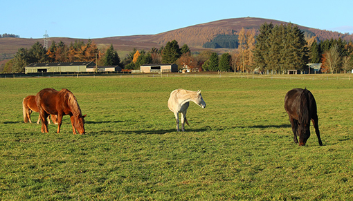free activities for children at Redwings Mountains this autumn holiday