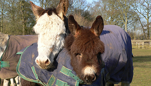 It was Martha's love that saved her foal Esther