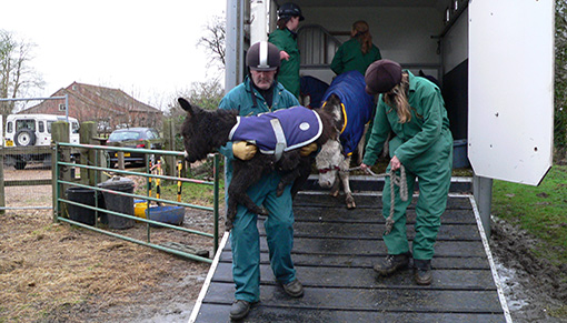 Alan and Clair helping donkeys rescued from Spindle Farm in 2008