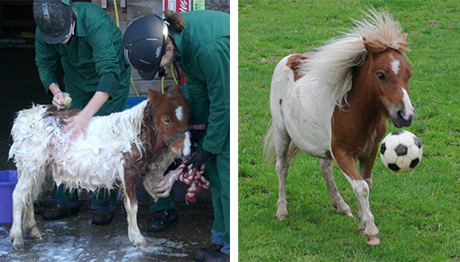 Pinocchio pictured shortly after his rescue (L) and then playing football just weeks later (R).