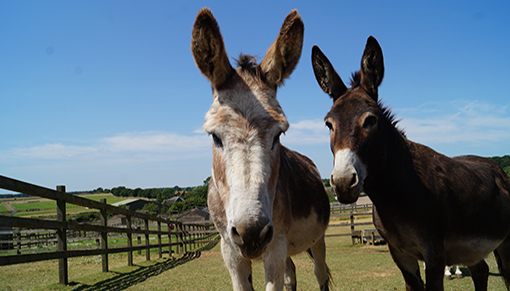 Wacko and Wiggins can't wait to see you at Redwings Aylsham!