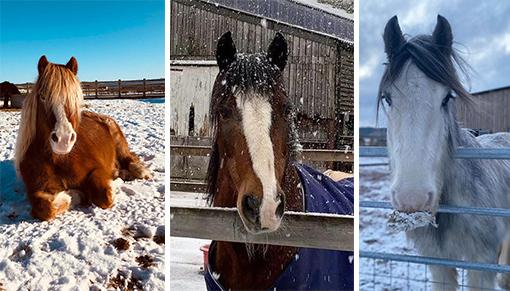 Comet, Amadeus and Wham enjoying the snow.