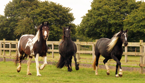 Horses turned out at Redwings' largest farm