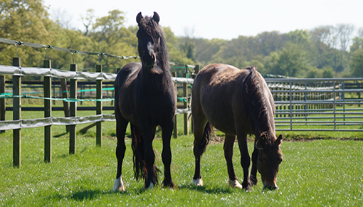 Bella and Charlie are enjoying their new life at Redwings