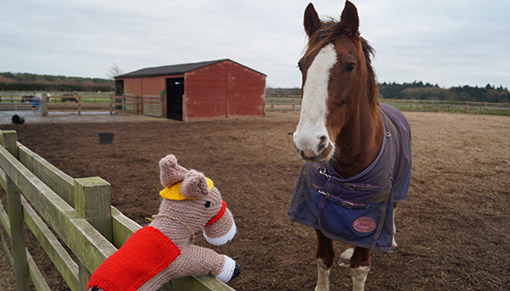 Redwings Amersham rescue survivor Bungle with his knitted horse