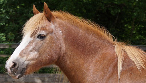 Redwings Adoption Star Dolly invites you to her birthday party
