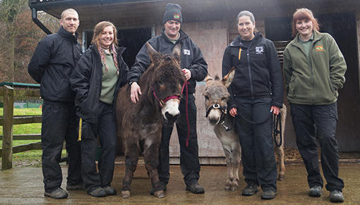 Redwings rescued donkey Addison rehomed to dinosaur park