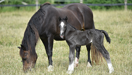 Redwings gives a home to rescued mares and their foals