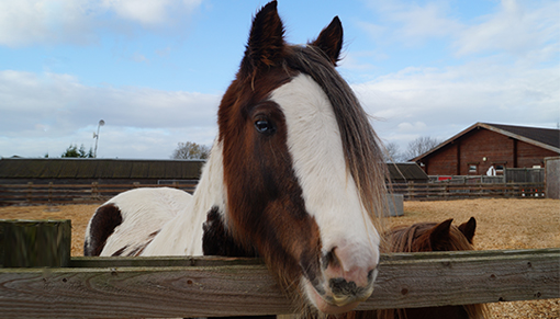 free activities for kids this half term at Redwings Oxhill