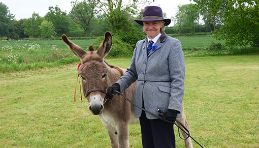 Plus we have classes for donkeys too!