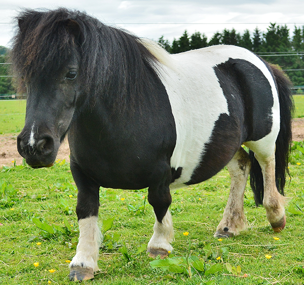 Enjoy summer holiday activities at Redwings Mountains