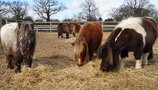 Congratulations to the winner of Redwings' Autumn prize draw