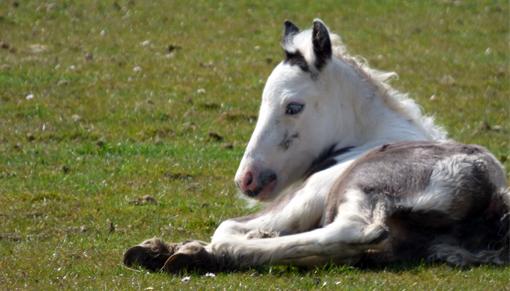 Newborn foal at Redwings