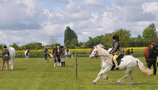 Redwings Show 2017 results