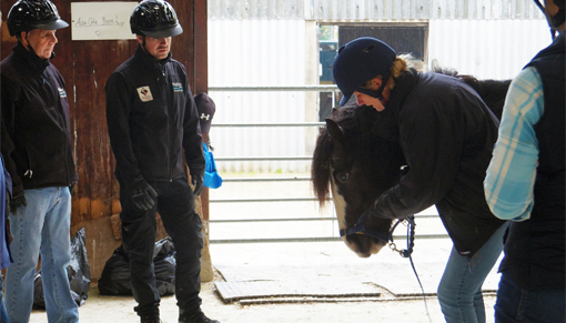 Control of Horses Act training for local authorities