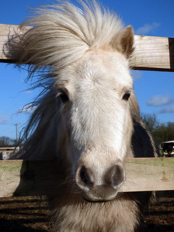 Sponsor a horse for Easter