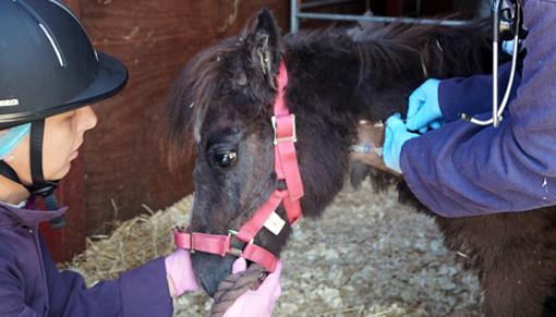 Bodmin Moor pony Arthur