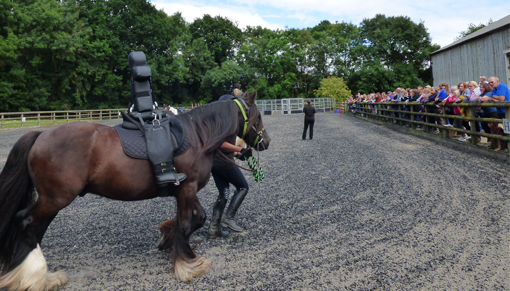 Rehoming demonstration at Redwings' annual open day