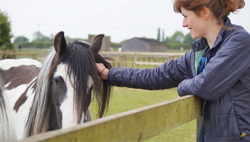 Meet the ponies and learn about our work at our Open Day this July
