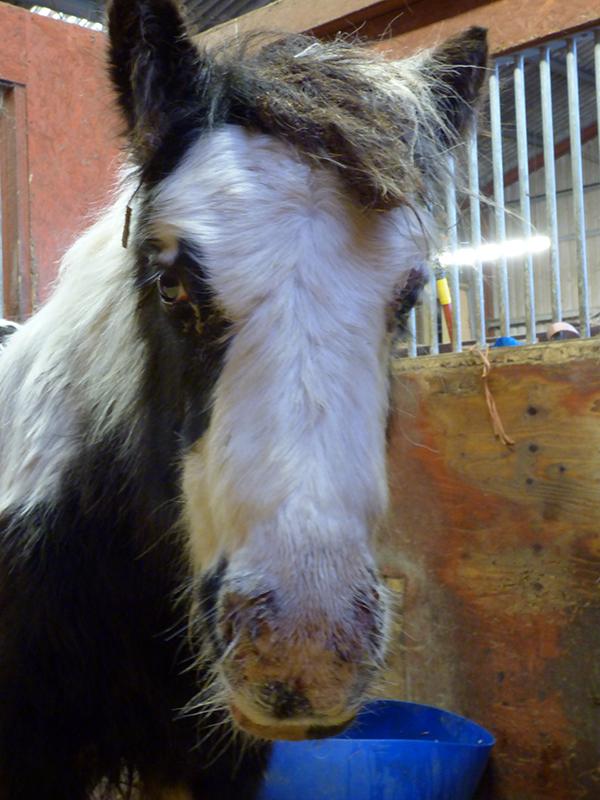 Haddiscoe mare and foal rescue