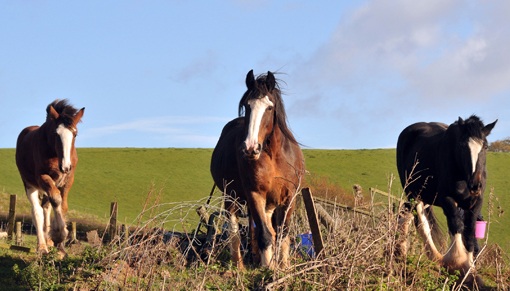 The Shires rescued included mares with foals at foot