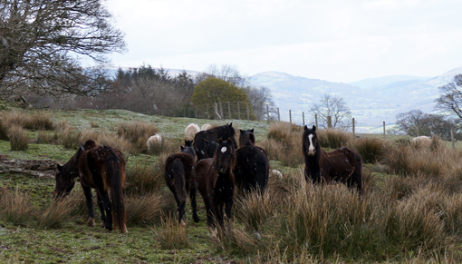 Redwings rescue horses from South Wales