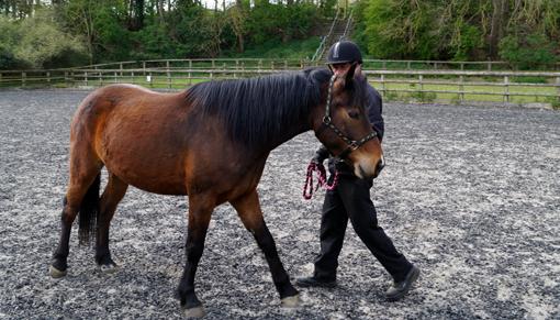 Mark Hudson external horse handler