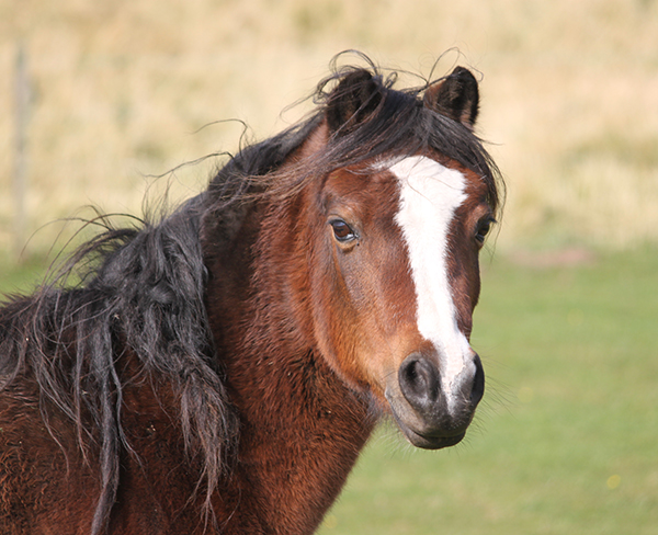 Mid-term activities at Redwings Mountains