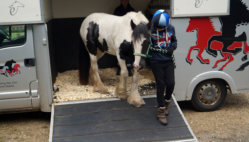 Rehome a rescued pony