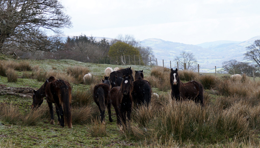 Redwings rescue 120 horses, one third from moors and commons