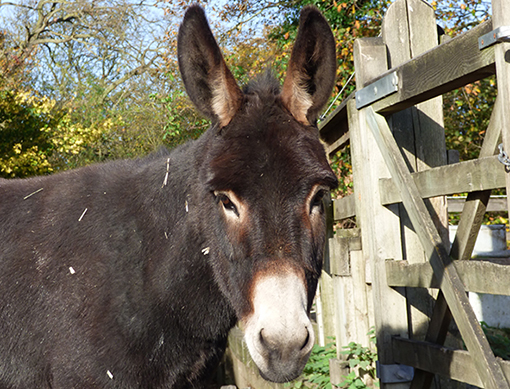 Happy ending for lonely donkey Ruby this Valentine's Day