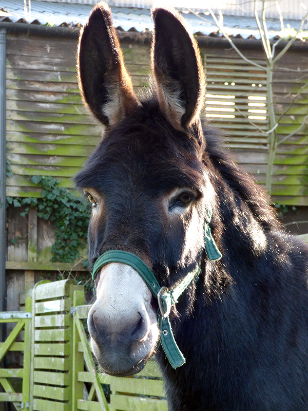 Happy ending for lonely donkey Ruby