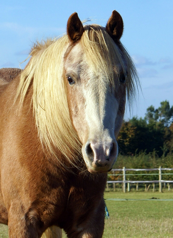 Redwings Horse Sanctuary Spirit