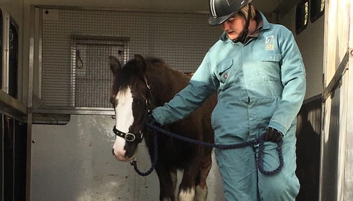 Injured foal found fly-grazing in Tilbury, Essex
