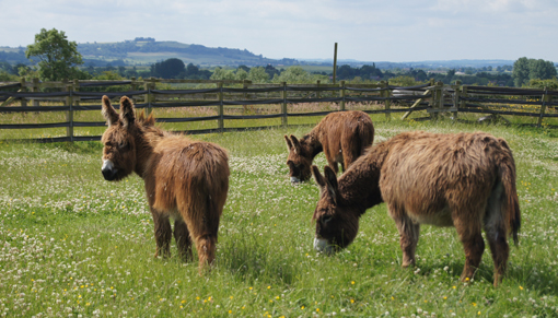 Arya, Merlin and Adel have enjoyed their first year at Redwings