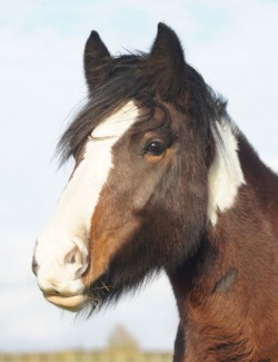 oxhill redwings horse sanctuary and equine veterinary centre