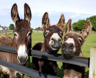 free activities for kids this Easter at Redwings Oxhill