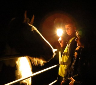 Meet Amigo at Redwings' Aylsham After Dark event