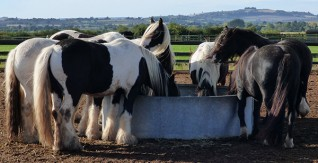 Fundraisers make a real difference to Redwings rescued horses