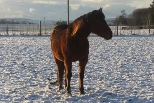 Guardian Deirdre hosted a fundraising Christmas Fayre for Redwings