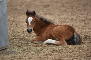 Picture of a young foal
