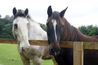 An image of Oliver (right) pictured with his friend, blind horse Boo